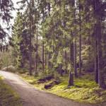 Die Herausforderung annehmen: Der schnellste Weg zu mehr Selbstakzeptanz